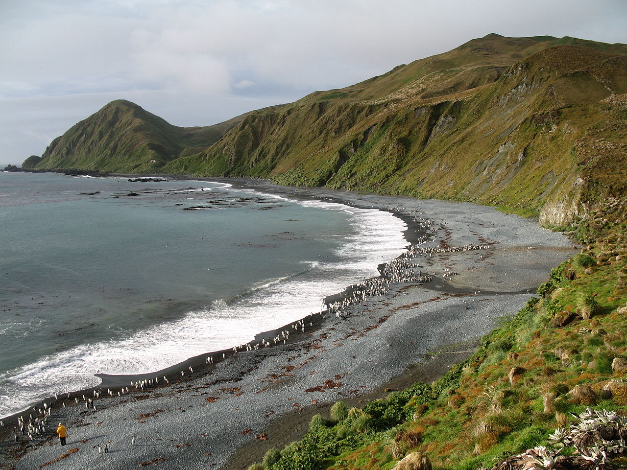 Macquarie Island in Tasmania - Australia
